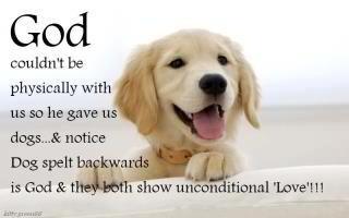 god spelled backward